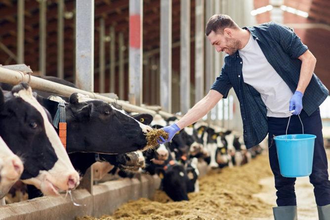 Bienestar Animal en la producción ganadera