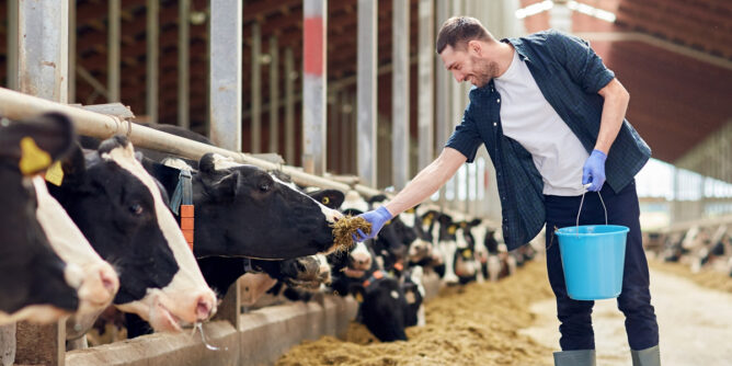 7 cursos imprescindibles de bienestar animal