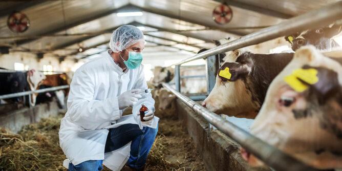 Bienestar animal, ¿Certificación Welfair, Reglamento Bienestar Animal (IAWS) y/o Global G.A.P.?