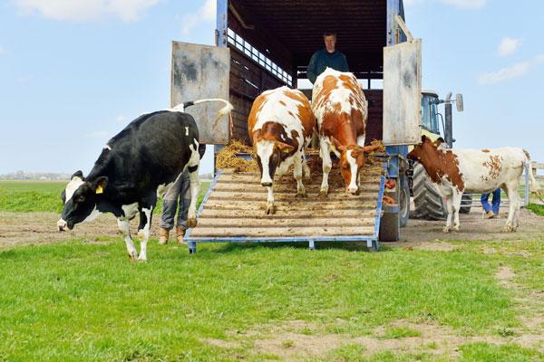 Bienestar Animal en el transporte de animales vivos