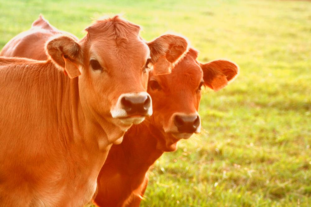 biocidas de uso ganadero